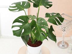 エランビタール改質水で植物を育てよう